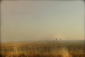 Misty Meadow by Mia Friedrich