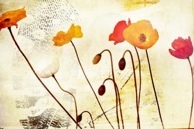 Poppies Dancing by Mia Friedrich
