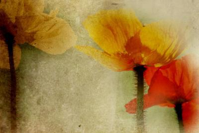 Poppies Talking by Mia Friedrich