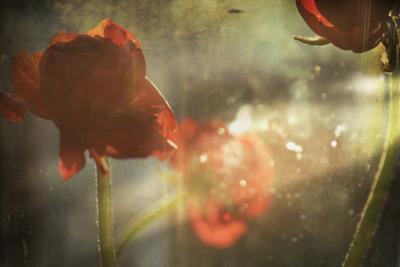 Red Flower by Mia Friedrich
