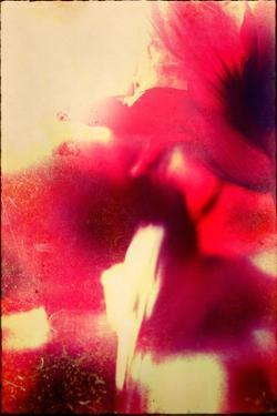 Red Flowers by Mia Friedrich