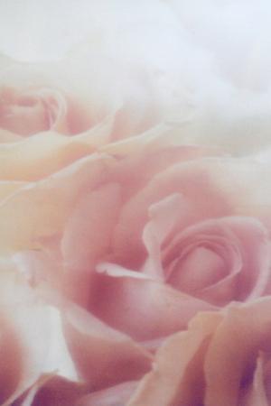 Sleeping Roses by Mia Friedrich