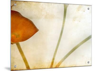 Study of Calla Lily by Mia Friedrich