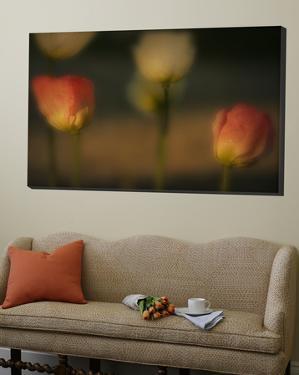 Study of Flowers by Mia Friedrich