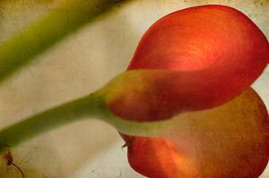 Study of Red Flower by Mia Friedrich