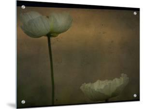 Study of Two White Flowers by Mia Friedrich
