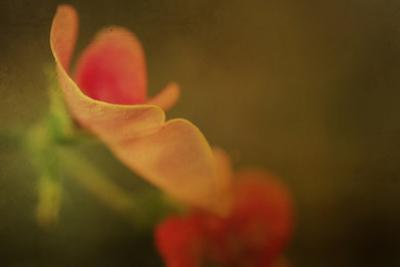 Sweet Pea in Summer by Mia Friedrich