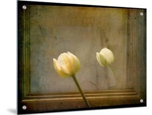 White Tulip against Framed Mirror by Mia Friedrich