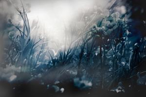 Woodland in Winter with Flowers by Mia Friedrich