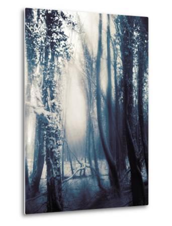 Woodland in Winter by Mia Friedrich