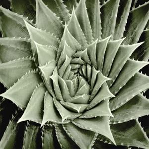 Green Succulent I by Mia Jensen