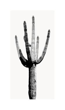 Saguaro Black & White I by Mia Jensen