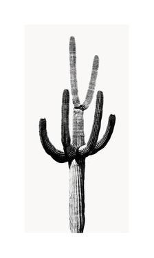 Saguaro Black & White III by Mia Jensen