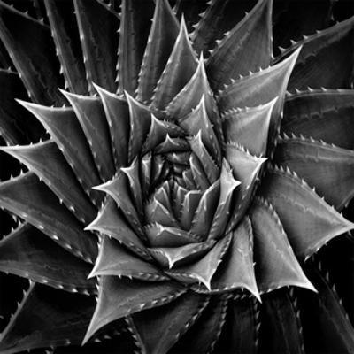 Succulent I by Mia Jensen