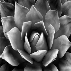 Succulent II by Mia Jensen