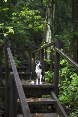 A Dog Waiting on Stairs, Semuc Champey Pools, Alta Verapaz, Guatemala by Micah Wright