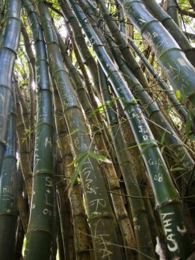 Carved Initials on Bamboo Stalks on the Kalalau Trail by Micah Wright