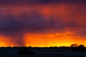 Picturesque Scene of Etosha National Park over Sunset by Micha Klootwijk