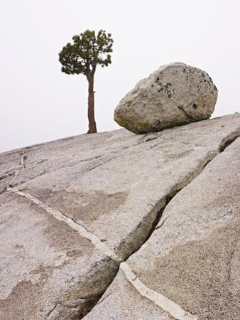 Lone Pine Tree and Boulder on Patterned Granite