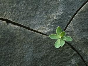 Plant Growing in Cracked Boulder by Micha Pawlitzki