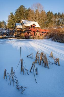 Pond Grasses by Michael Blanchette