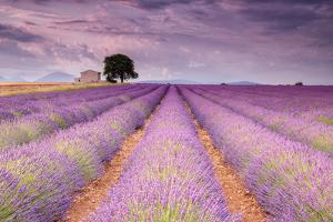 Stone House in Lavender Field by Michael Blanchette
