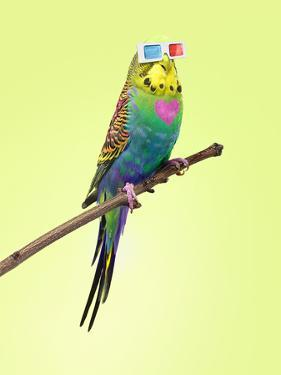 Neon Rainbow Coloured Budgie with 3D Glasses by Michael Blann