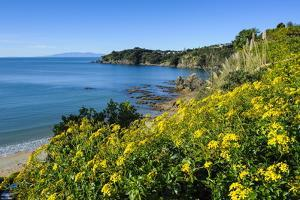 Blooming Flowers over Oneroa Beach by Michael