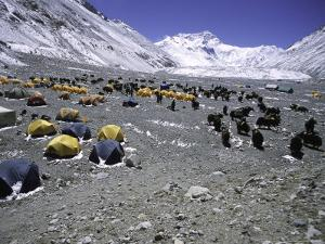 A Heard of Yaks and Tents, Nepal by Michael Brown