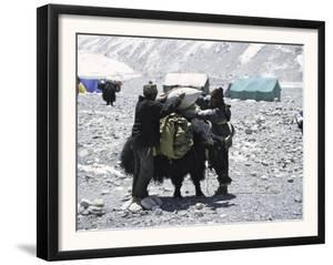 A Yak'Sdays Work, Nepal by Michael Brown