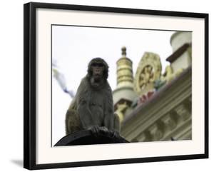 Ape, Nepal by Michael Brown