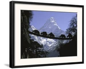 Bridge on Ama Dablam, Nepal by Michael Brown