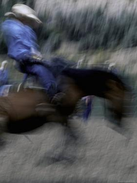 Horse Rider in Motion, USA by Michael Brown