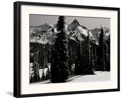 Snowy Mt. Rainer with Trees, Washington, USA by Michael Brown