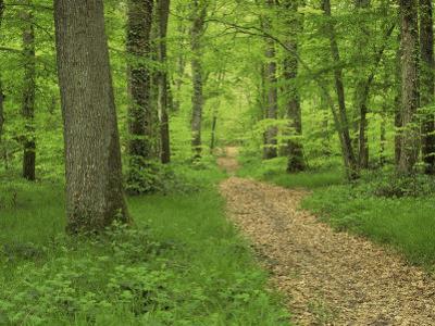Forest of Chambord, Loir Et Cher, Loire Centre, France by Michael Busselle