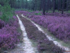 Landes Forest, Aquitaine, France by Michael Busselle