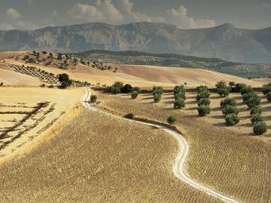Landscape Near Jaen, Andalucia, Spain by Michael Busselle