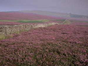 Moors Near Grinton, Yorkshire, England, United Kingdom by Michael Busselle