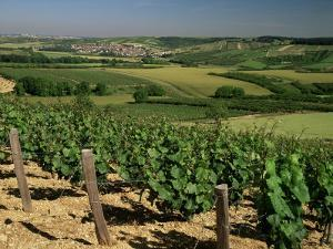 Vineyards Near Irancy, Burgundy, France by Michael Busselle