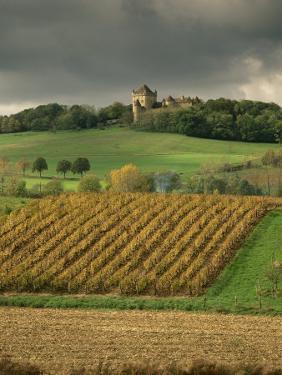 Vineyards Near Lons Le Saunier, Jura, Rhone Alpes, France by Michael Busselle