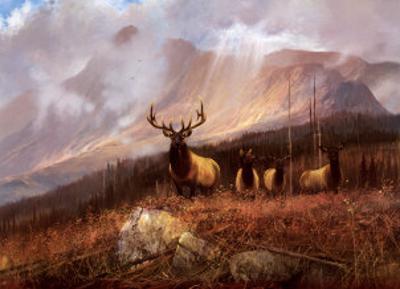 Bookcliffs Elk II by Michael Coleman