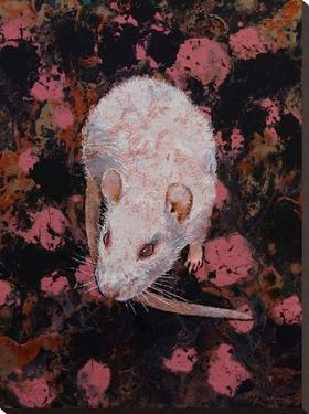 White Rat by Michael Creese