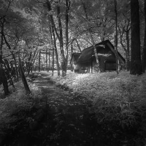 Cabin in the Woods by Michael de Guzman