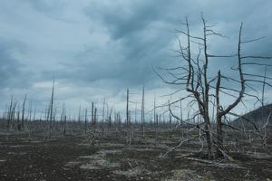 Dead Tree Forest on the Tolbachik Volcano, Kamchatka, Russia, Eurasia by Michael
