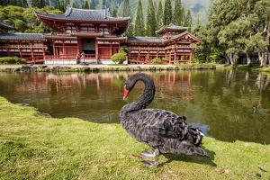 Byodo-In Temple, Valley of the Temples, Kaneohe, Oahu, Hawaii by Michael DeFreitas