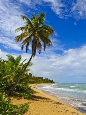 Tres Palmitas Beach, Puerto Rico, West Indies, Caribbean, Central America by Michael DeFreitas