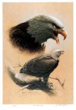 Bald Eagle Study by Michael Dumas