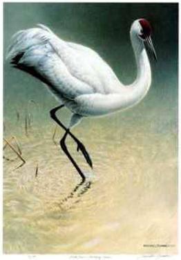 Flood Plane - Whooping Crane by Michael Dumas