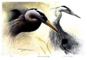 Great Blue Heron Study by Michael Dumas
