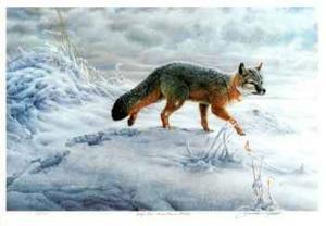 Swift Fox by Michael Dumas